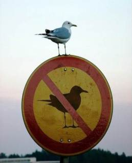 ironic bird.jpg